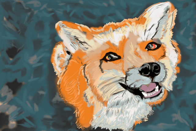 Digital Painting of a Fox sitting looking up at you