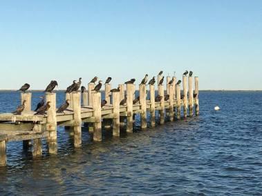 chappy-birds