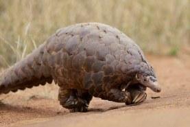 Rare Animal Found in West Milton