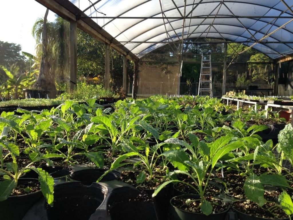 Raised Vegetable Garden Florida