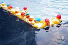 ToT - Ducks