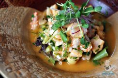 Pinch - Born Free Shelter Brunch - Ceviche