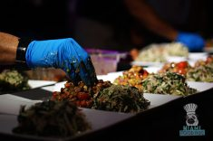 Swank Farms - Gauchos Asado Dinner - Slaw Setup