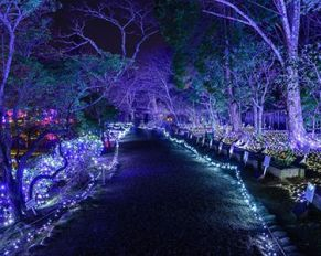 fairchild botanical garden miami glasnik