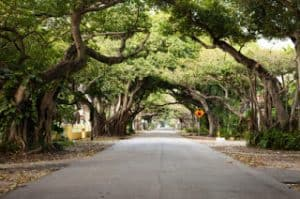 Old-Cutler-Road-Coral-Gables