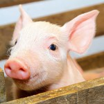 Sheriff Animal Farm in Key West offers free entry days