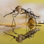 Got mosquito problems? Get help from Miami-Dade