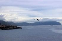 Genova, Italy #100DaysofMiaPrima 9