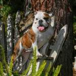 7 Tips to Increase Your Dog's Life Expectancy