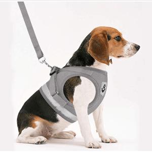 GAUTERF Pet Universal Harness & Leash