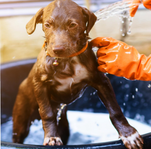 Read more about the article How Often Should I Bathe My Dog