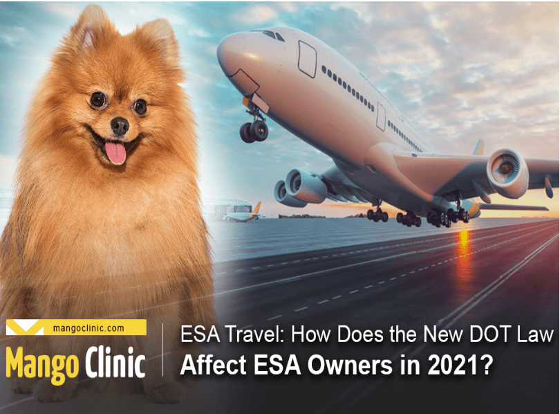 Read more about the article Airlines can soon deny emotional support animals free flights