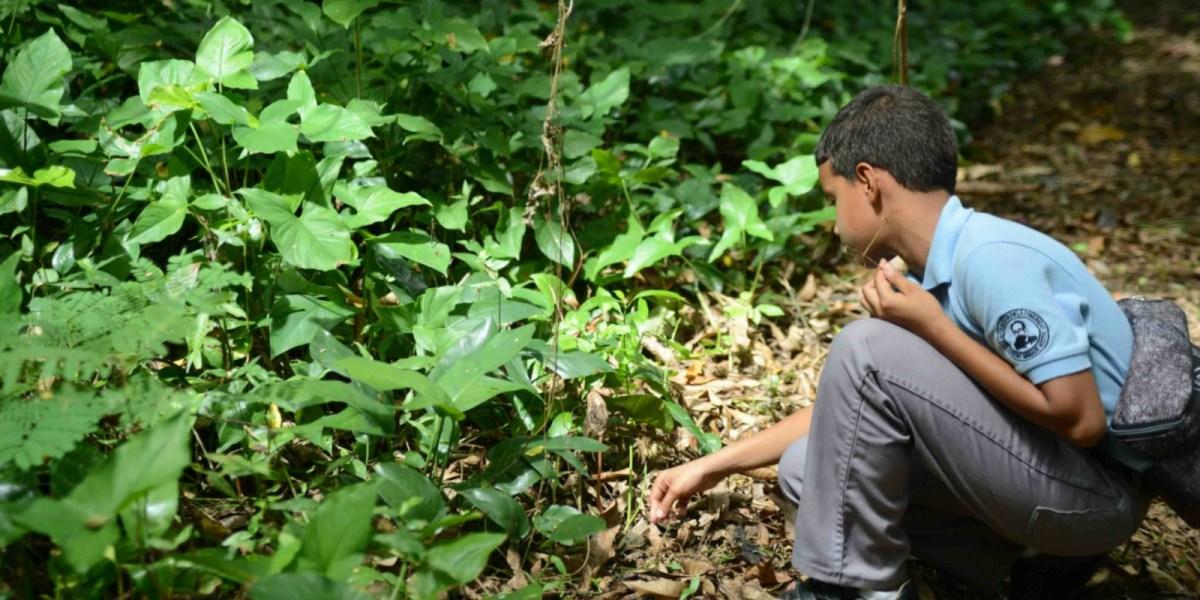 Un requisito para estudiantes del sistema público tener contacto con la naturaleza