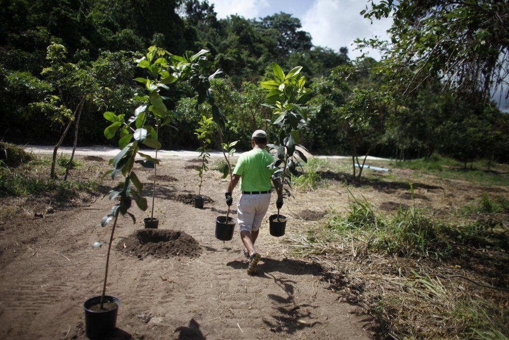 Siembra de 300 árboles en la riviera de Río Grande de Manatí por empleados voluntarios de UPS.