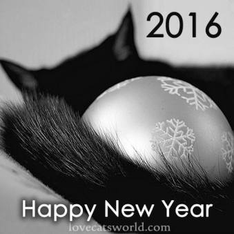 La multi ani! Happy New Year!