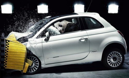 fiat_crash_panda_lead