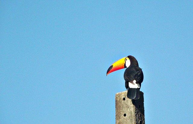 ブラジルの鳥