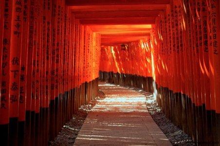 fushimi-inari-torii-gates-kyoto-micah-gampel-2010