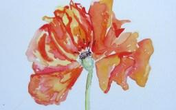 "Poppy, ~3.5 x 3.5"", watercolor on paper"