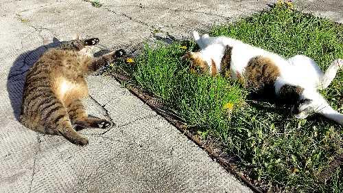 Biene und Lulu