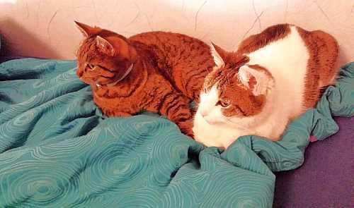 Fiene und Lulu