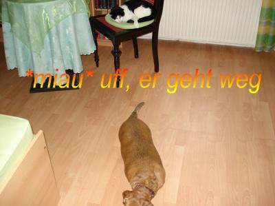 Bildgeschichte Hund und Katzen