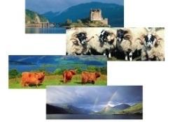 Long Postcards