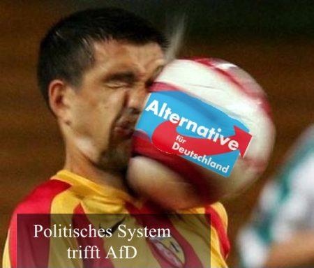 AfD+Politik