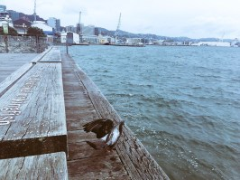 This bird kept me company for lunch in Wellington, NZ.