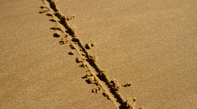 Finding Middle Ground in the Business Process Tug-of-War
