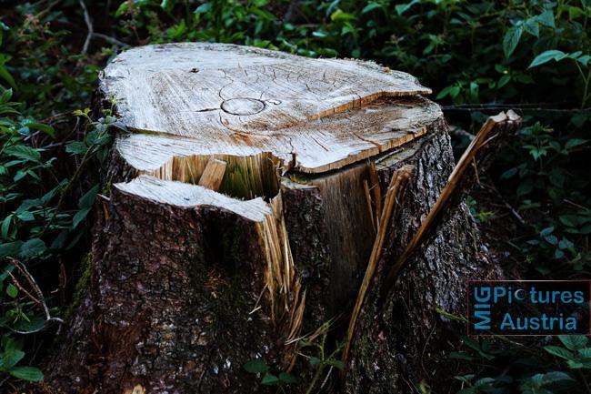 Canon EOS 6D – Spaziergang; Landschafts- & Architektur-Fotografie/Tests Outdoor