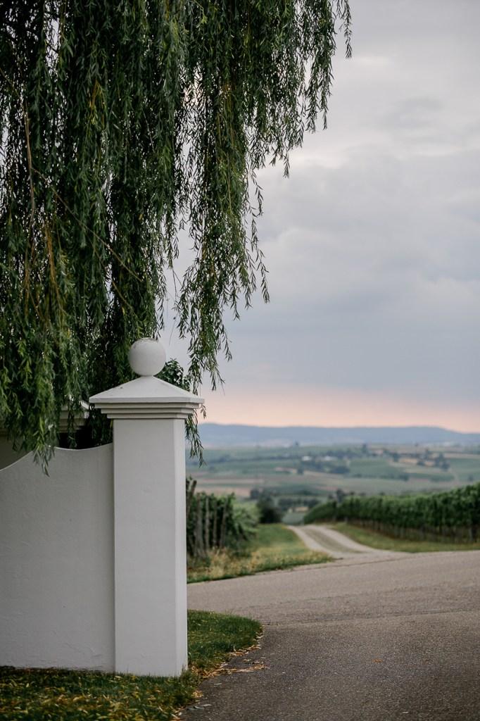 Weinberg Aussicht Abendsonne