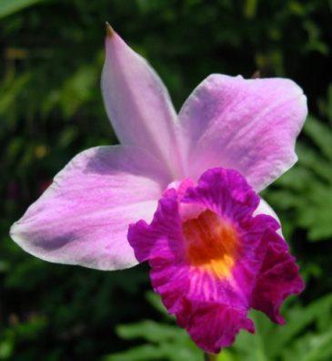 Found in the Orchid GardenFound