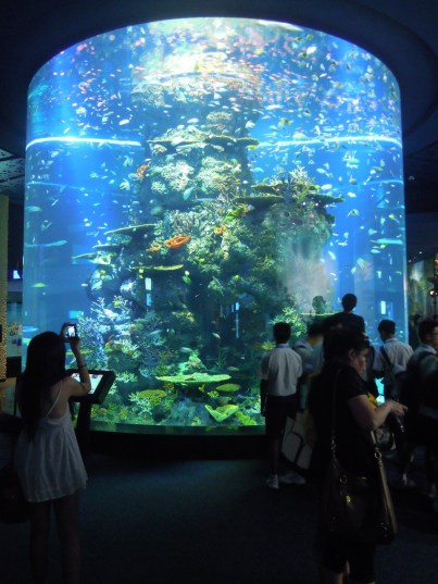One of the large fish tanks