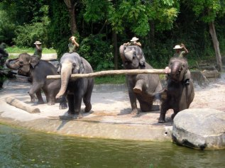 The elephants at the Singapore Zoo put on a wonderful show