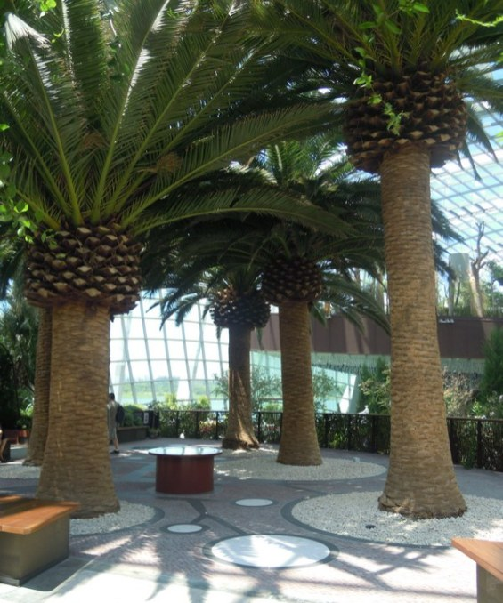 Flower Dome trees