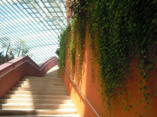 Flower Dome stairs