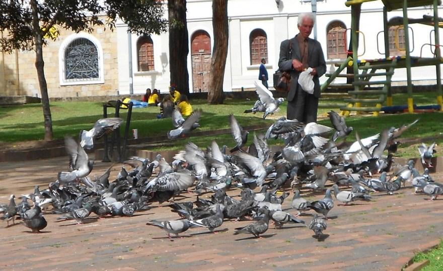 Pigeon feeder of Usaquen