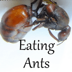 eating ants sq 150
