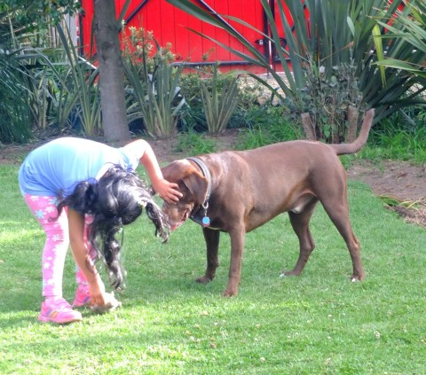 valentina-playing-with-corzo-taking-ball