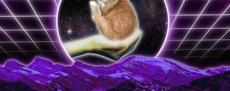 Scrungy cat