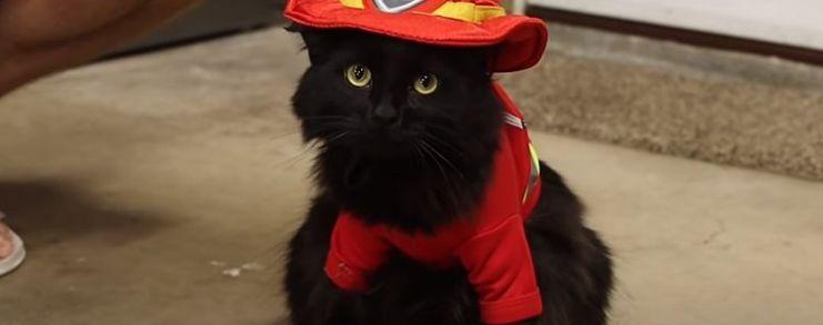 a cat dressed as a fireman aka fireman cat
