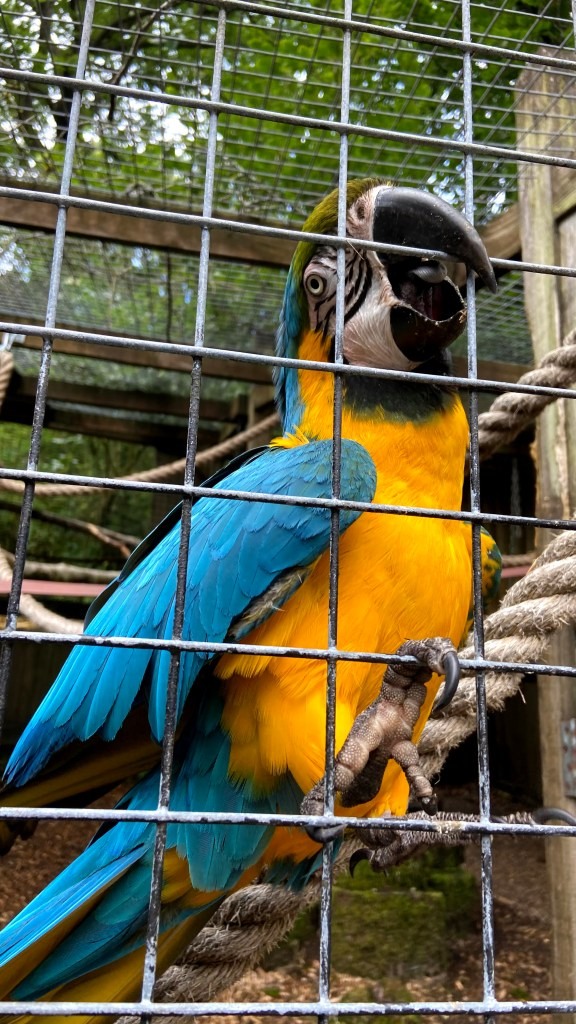 When visiting becky falls, we were greeted with a macaw parrot