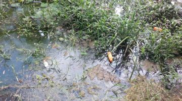 Trash in waterways at Munda Wanga Botanical Gardens