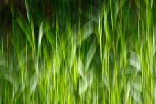 Hazy Grass