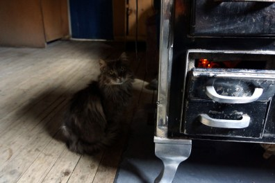 Carmela House Cat