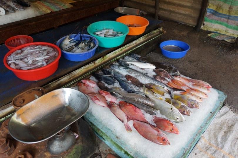 Fort Kochi (Cochin) Fish Market