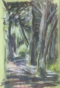 Wooded Path, Gualala, 2013,
