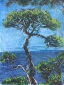 Cypress, Gualala, 2013
