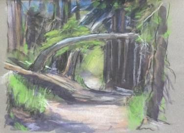 Path to Dungeness Wildlife Refuge, June, 2016